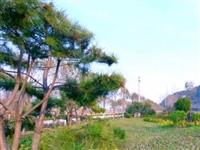 【关注】邙山、南部山区绿化……2021年荥阳新造林6751亩
