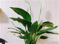 建平人注意!这20种植物,千万别乱晒太阳!晒一盆死一盆!