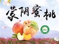 【今日报价】2019山东蒙阴蜜桃8月10日最新报价