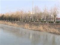 【头条】商河县积极应对 抵御寒潮来袭