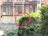 【附视频】富顺北湖上城一业主家惊现大蜥蜴,吓得人毛骨悚然!