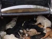 气愤!专偷齐河、禹城、临邑,缴获死犬600余条,警方打掉一盗狗团伙!