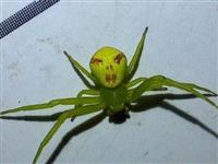 """固始这个地方惊现""""人面蜘蛛""""!神似人脸!你见过吗?"""