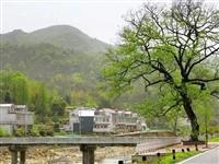 1579万专项资金用于金寨这个项目!