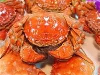 老榕树首届螃蟹节,5000只螃蟹免费送