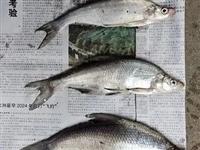 【禁捕】一(yi)時嘴饞電(dian)捕3條魚被(bei)拘!