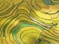 龙里这片稻田真的太美了,一定要去看一次!