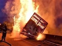 凌晨,观海卫收费站附近一货车起火,全车92头生猪仅1头幸存!