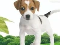 如何文明养犬?滨海公安为您划重点!