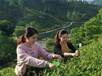金寨县油坊店乡:六安茶谷景色美!