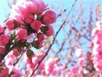 【生活】寻一处花开,何需远行!