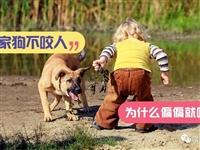 """每年被狗咬伤的人超千万!这份""""防咬宝典"""",黔江每个父母都要收好,比狂犬疫苗更靠谱!"""