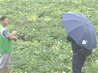 违法必究|重拳打击石林县近期查处一起非法侵占农用地的违法行为