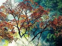 金寨的秋色美景,简直让人陶醉回味无穷!