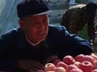 招远果农太不容易了,这苹果树是不是真不能种了?