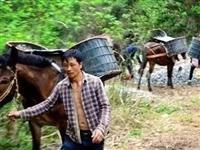 大别山里的马帮运输队!