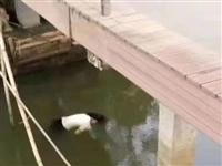 萍乡鹅湖公园发现一具女尸...!