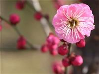 待到疫情消散后,我们在郑州港区双鹤湖再聚春暖花开时