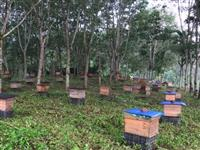 遵义一男子种植1010株罂粟,熬制成水养殖蜜蜂