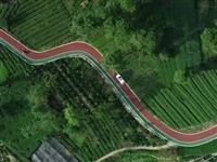 蓬溪这条农村公路竟然被省里点名了,原因是...