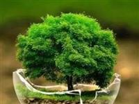 重磅丨谁破坏绿水青山,谁就要付出金山银山的代价!