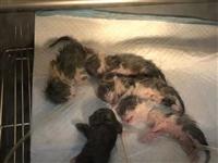 揭阳某宠物医院内5只新生猫崽全死亡,院方为宣传竟发圈称母子平安?