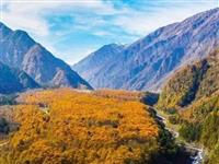 【周边游】赏彩林、泡温泉!雅安这个冷门小县,竟是秋景秘境!周末来回刚好!