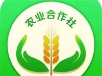 最新!甘肃拟认定838家省级农民专业合作社示范社,有你们村的吗?