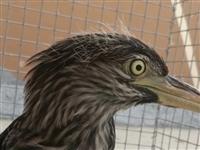 齐河这大鸟真是第一次见,长的居然像...