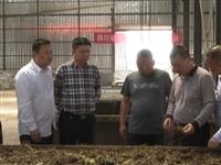 夹江县中药材产业助推农民增收致富