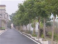 厉害了!揭西这个村的乡道都铺上了柏油路,投资约100多万元
