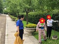 銀杏果治療腰疼?蘭溪母女倆狂采摘公園銀杏果