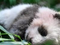 长期睡眠不足将改变基因!不是吓你…泗洪人一定要注意休息,爱惜自己的身体!