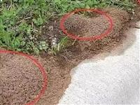黔江人警惕!远离路边这种小红土堆!曾有人中毒、休克!