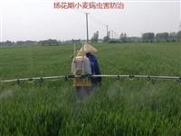 临泉农村的有福了,以后有人帮咱种地了!