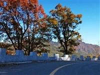 行走金寨中国红岭公路,赏最美秋色……