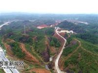 兴国县扎实推进低质低效林改造