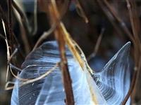 山西侯马再现冰蝴蝶奇观,像大自然的艺术品!