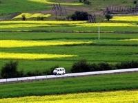 云南这12个乡镇获国家强力支持,石林西街口入选,为家乡点赞……
