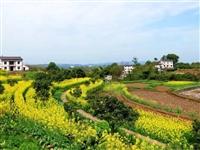 民警日记 泸州小镇双加,正在等待如约而至的春天