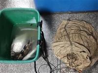 泸州男子在长江捕鱼,又摊上大事儿了