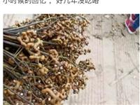 仁寿农村这种会打结的野果,以前2元一堆,现在竟卖20元/斤?