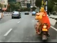 """""""齐天大圣""""驾驶摩托被查,怎么回事?快看!"""
