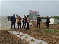 市农技中心到太湖桐城两地开展面源污染防治工作