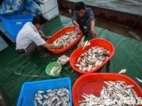 """太湖的""""馈赠"""":白鱼、白虾、银鱼造就的""""南浔味道"""""""