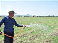 节水细灌助芦笋生长