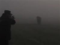 萧县:肉牛深夜四处逃窜 民警三枪将其击毙