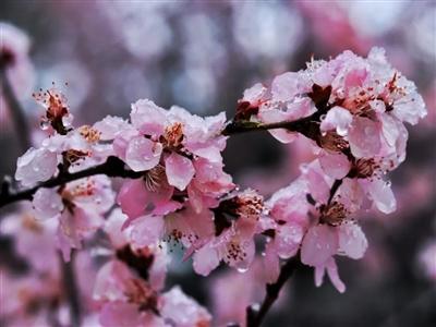 你被乱花渐欲迷了眼?来看看春雨下的齐鲁大地,美成壁纸!