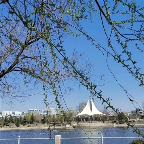 看图:阳春三月的周末,感受莱阳蚬河边上的好风光