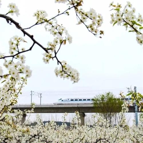 春意闹花枝俏~一起到莱阳约会春天吧